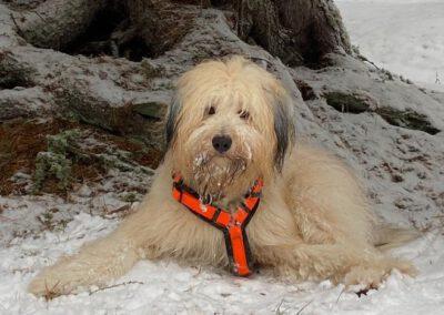 Hundeausbildung naturnah Wiesbaden - Adventskalender