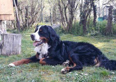Grafik Hund Hundeschule Hundeausbildung naturnah